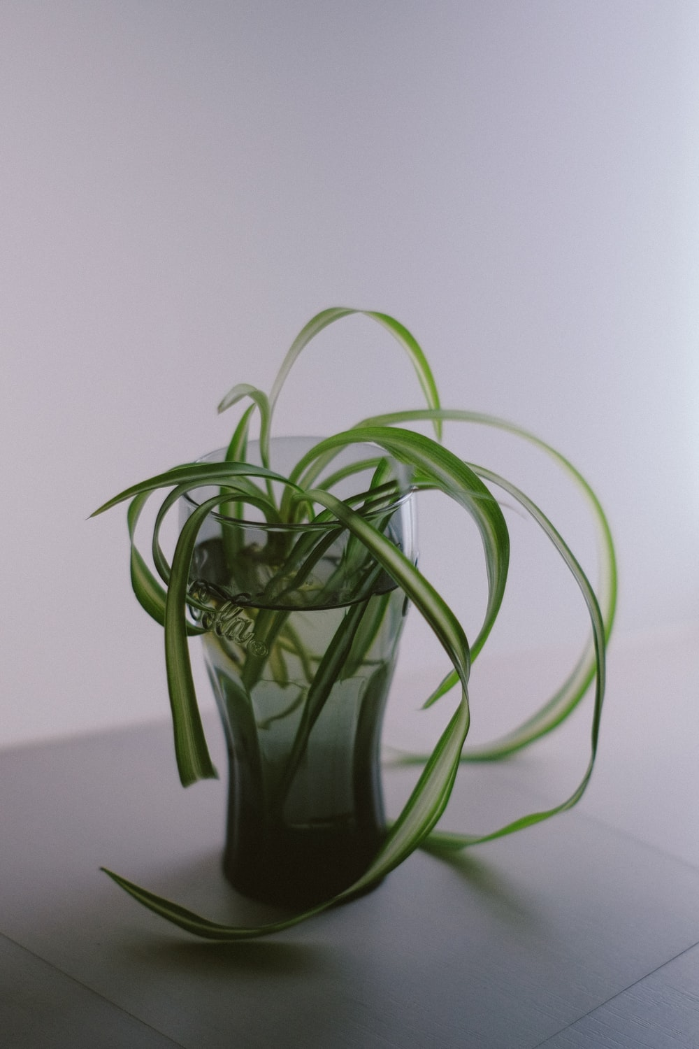 green-leafed plant in glass cup