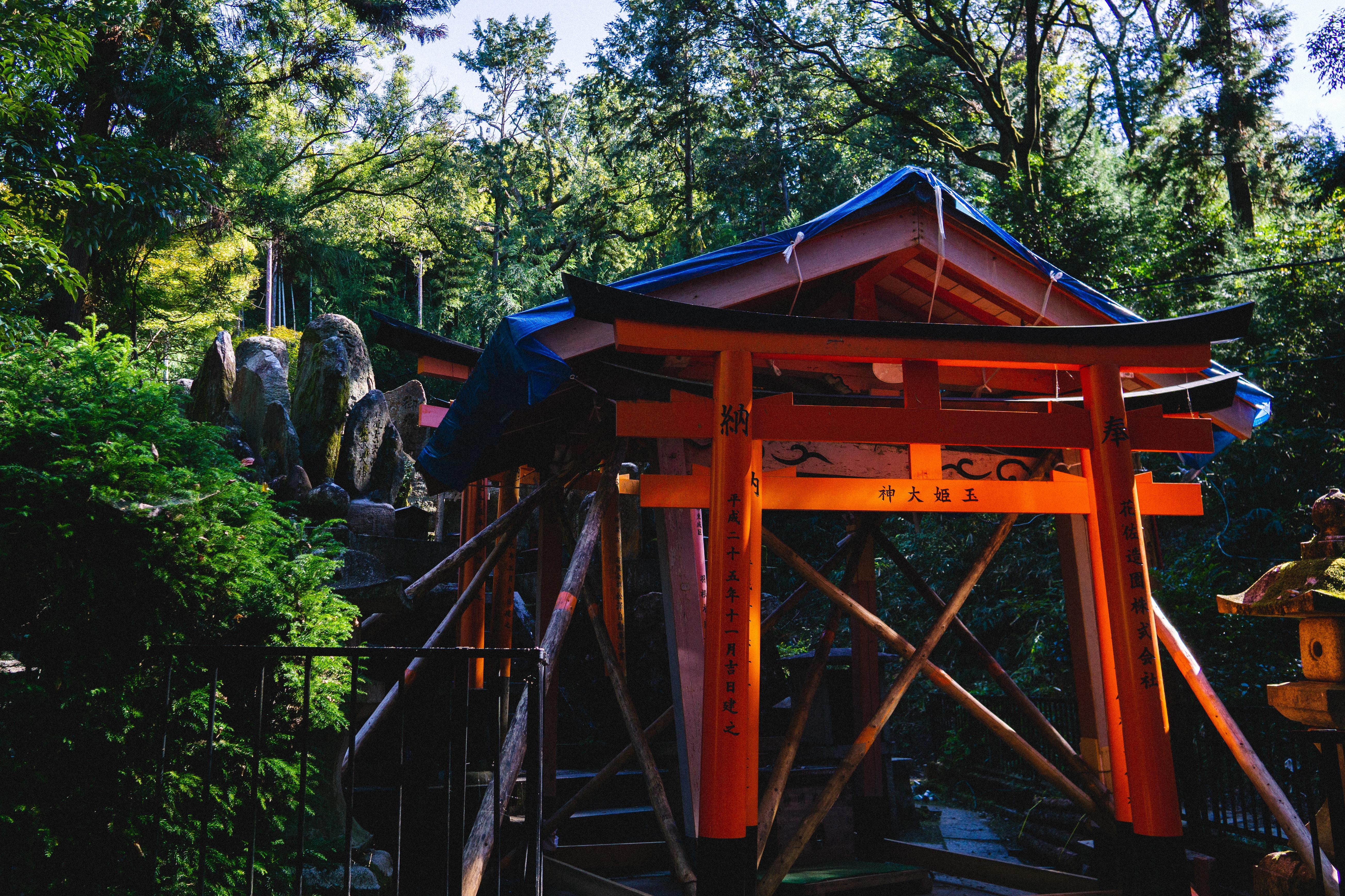tori gate besude trees