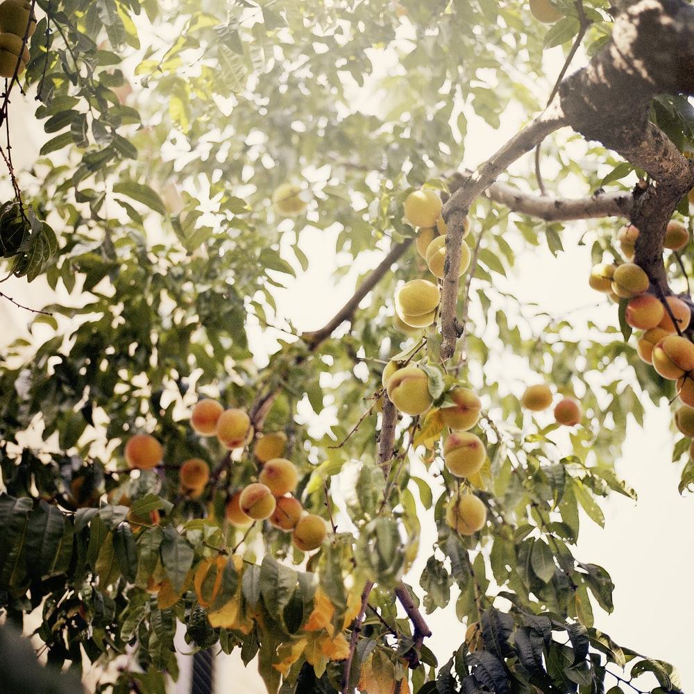 orangae fruits
