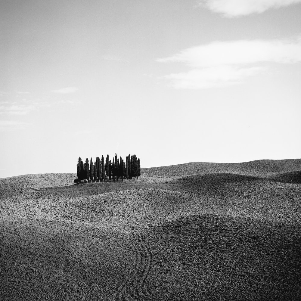 grayscale photo of trees on desert