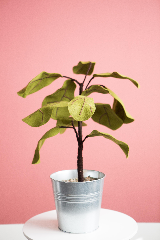 green leaf plant in white ceramic pot
