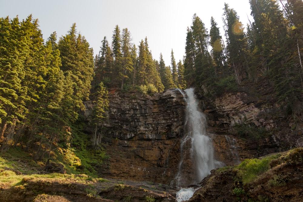 waterfalls beside trees at daytime
