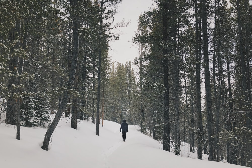 person in black jacket walking on snow