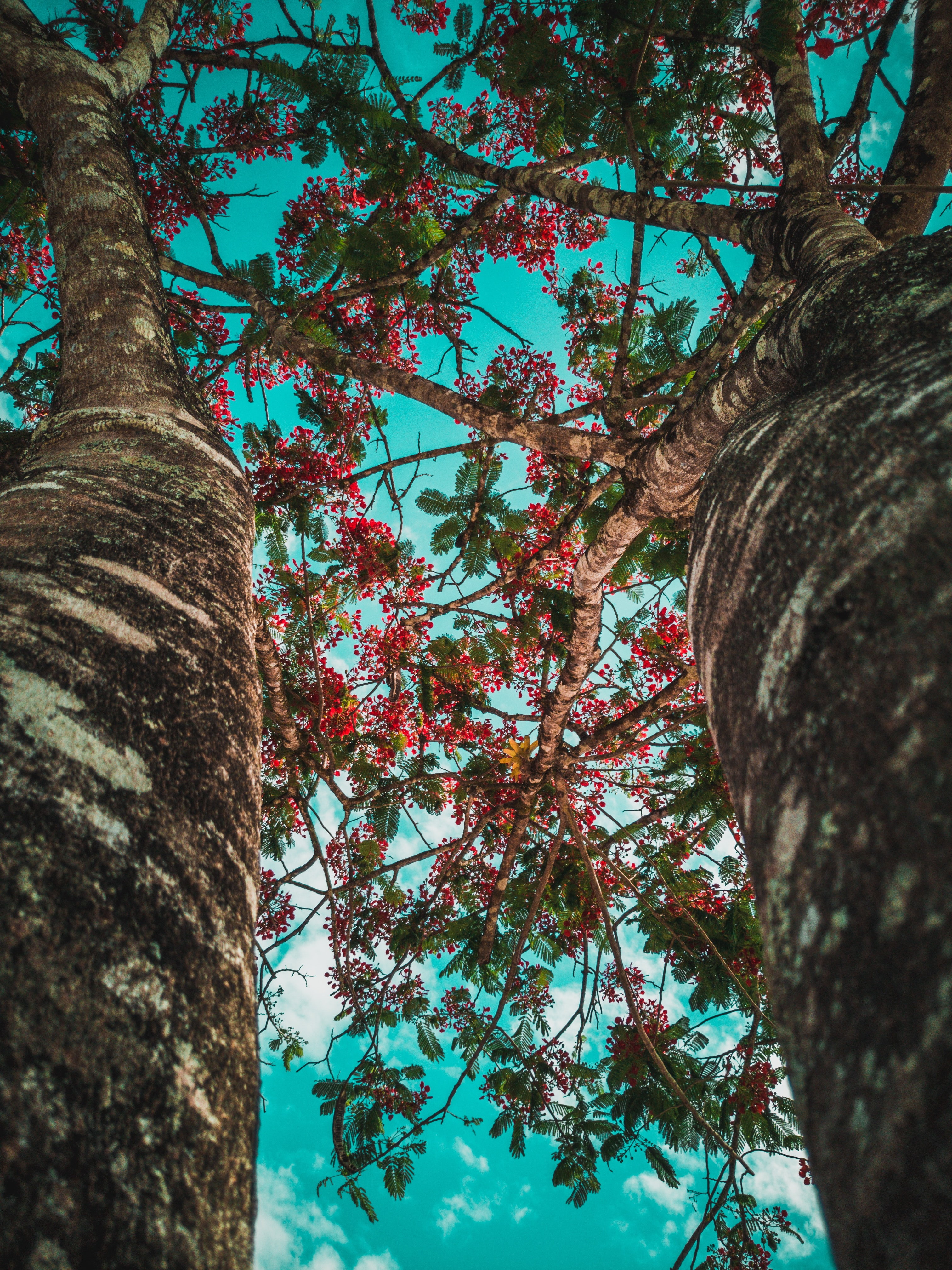 low-angle photography of green trees during daytime