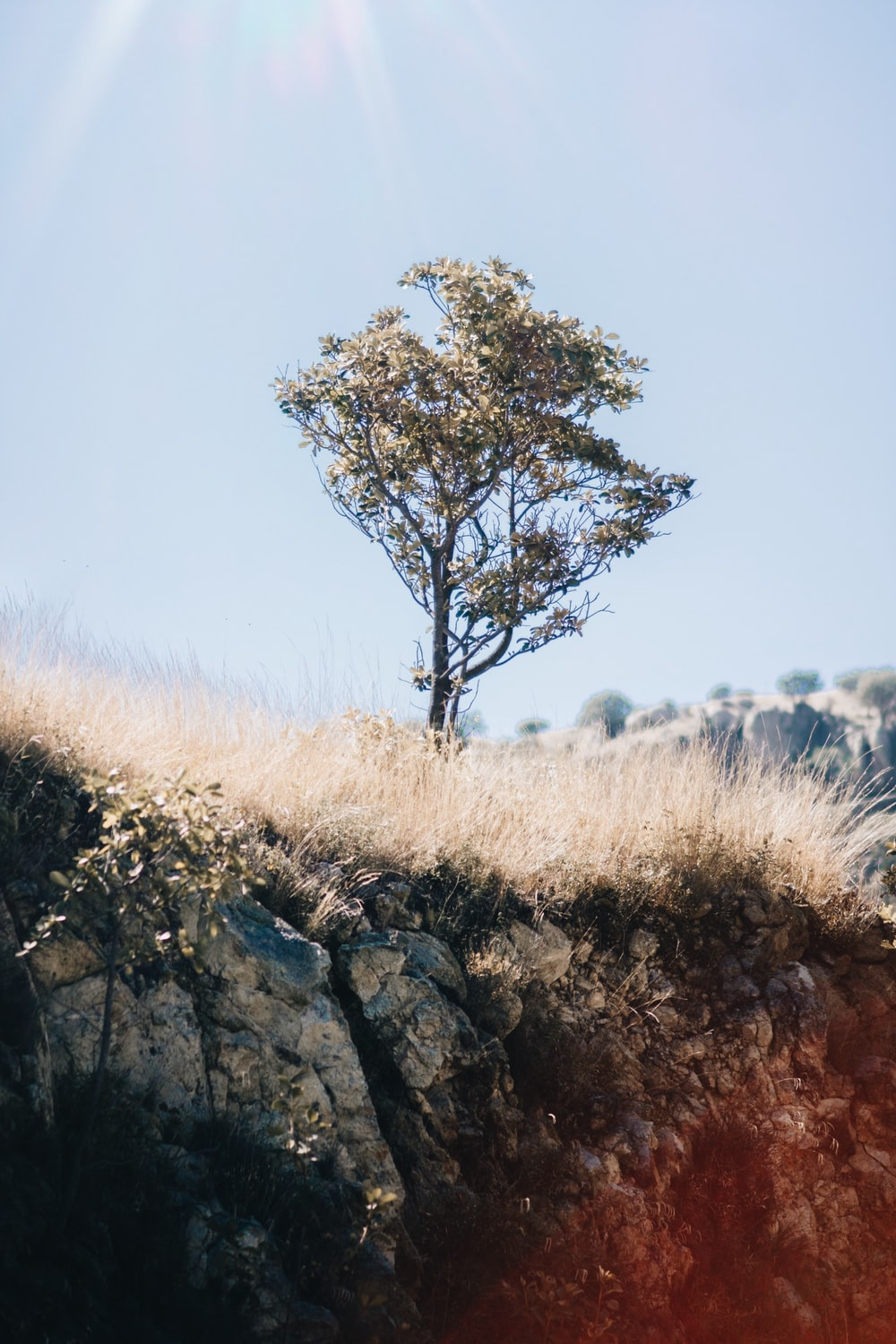 green-leafed tree near the edge of a mountain during day
