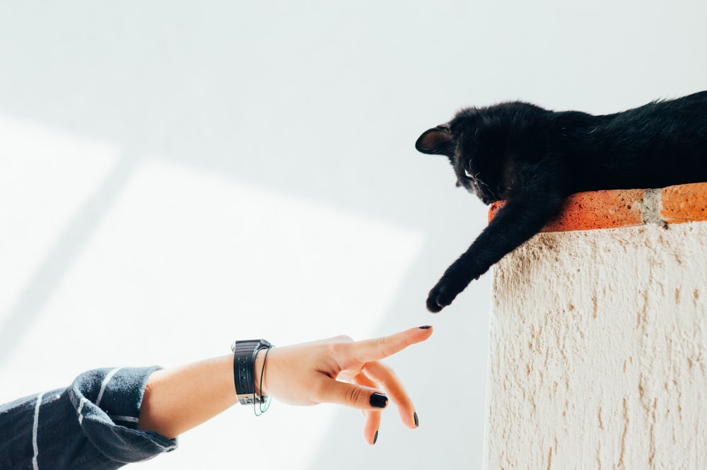 woman and cat joining hands