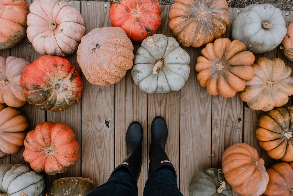 person standing on brown hardwood floor surrounded by pumpkins