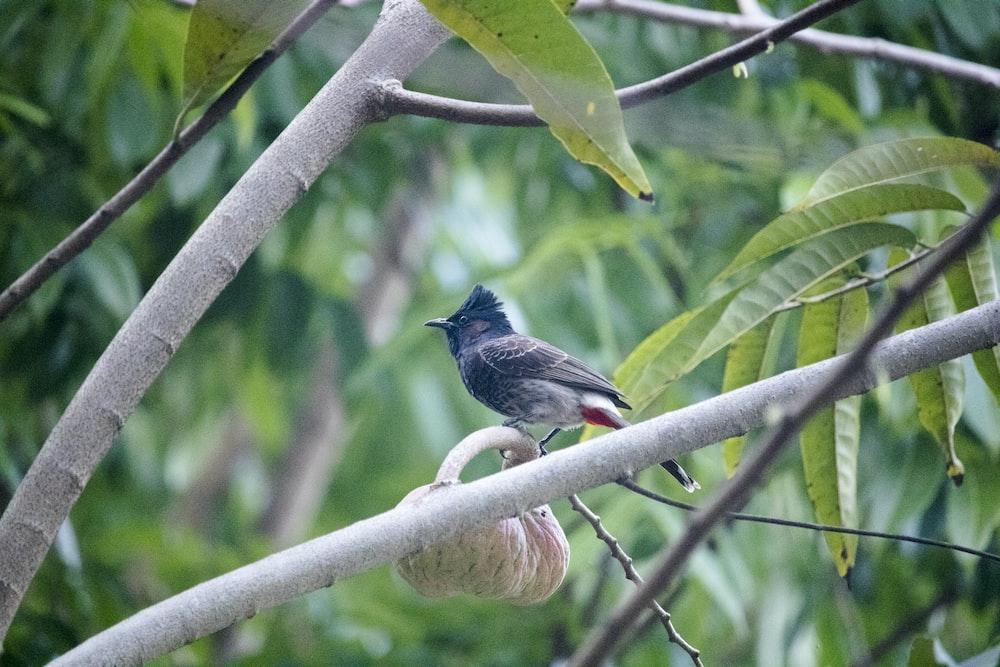 black and blue bird on green tree