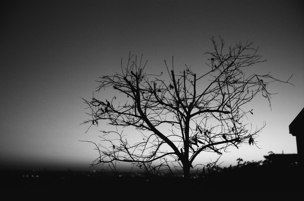 grayscale photography of leafless tree