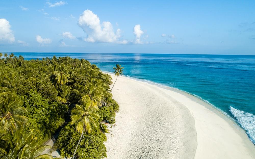 green palm tree nearby seashore
