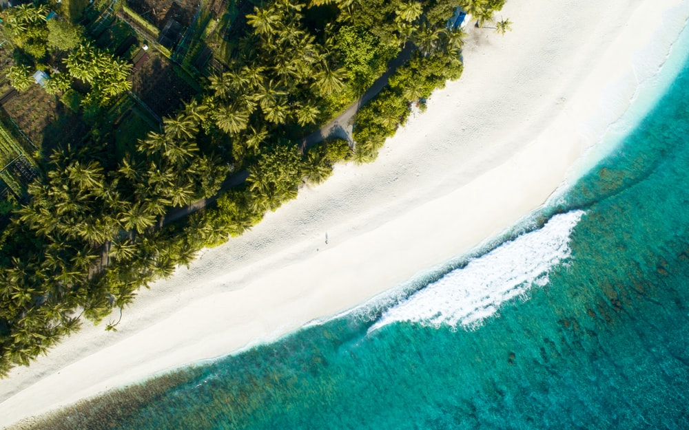 aerial view of palm tree near seashore during daytime