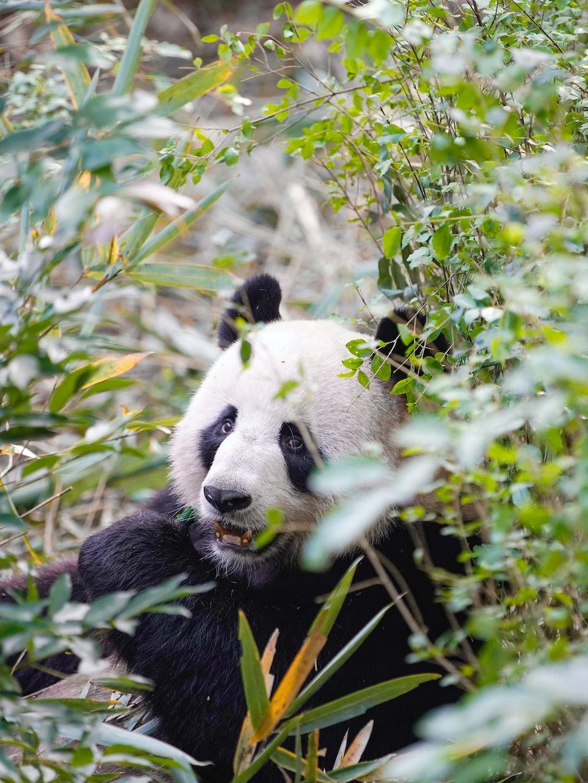 green plant across panda photo