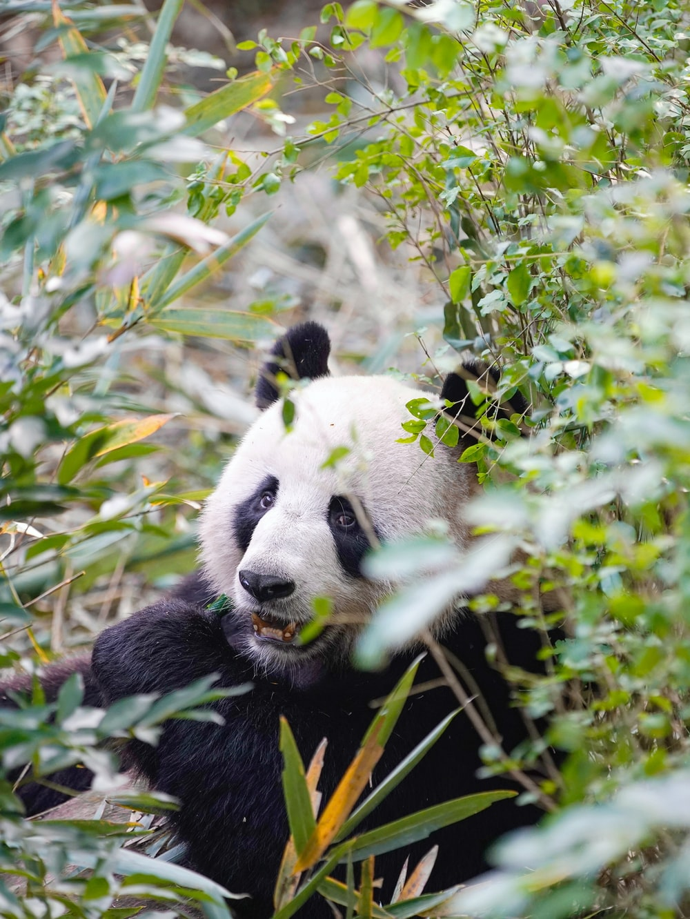 green plant across panda photo