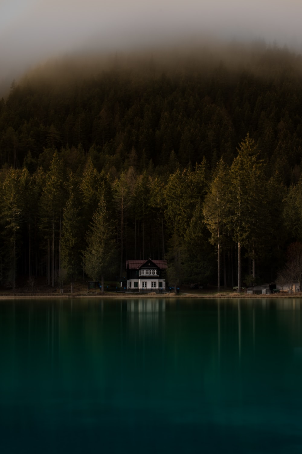 calm water front of pine trees