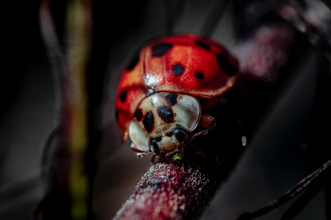 Clumsy Little Ladybug