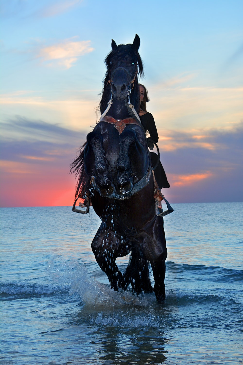 brown horse on body of water during daytime