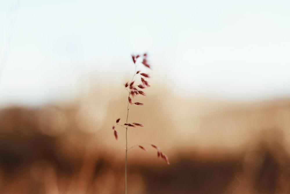pink grass selective focus photography