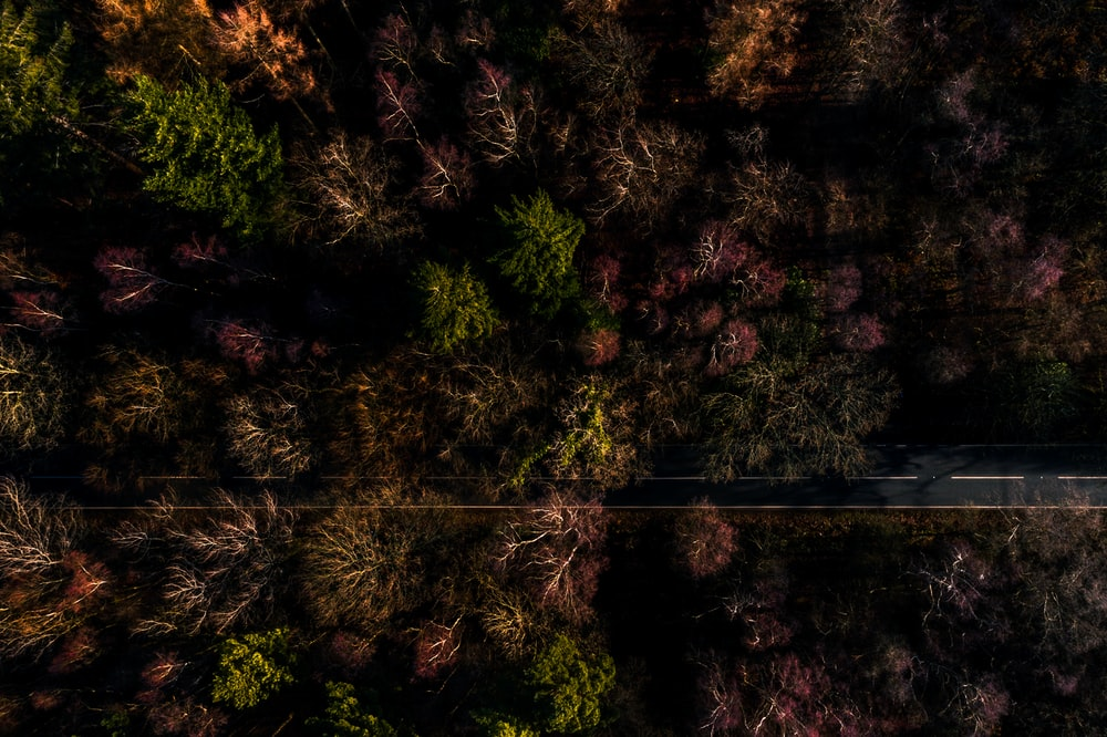 high angle photography of trees