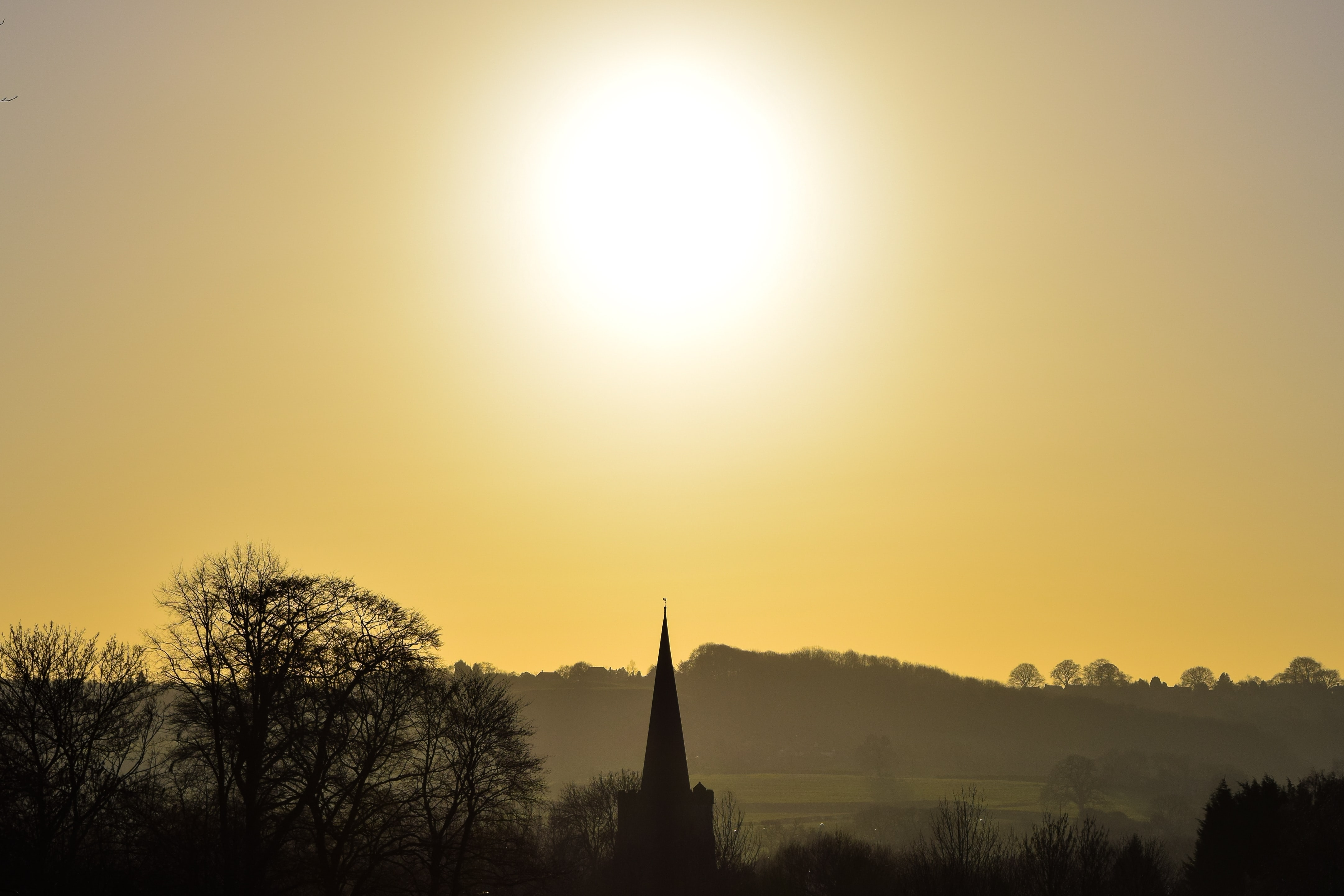 sun above trees