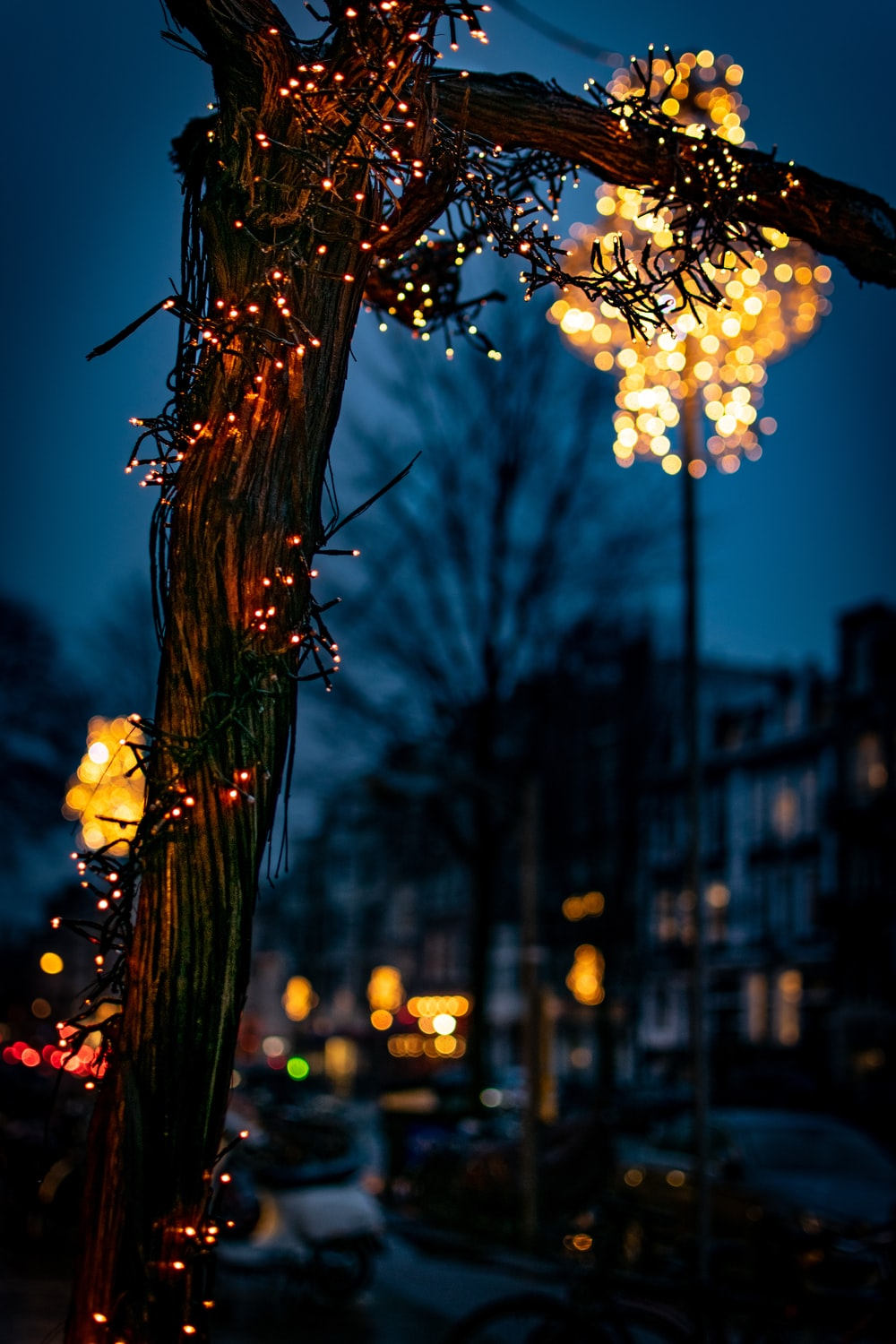 turned-on string lights in tree