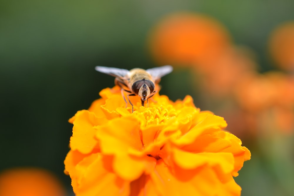bee perching on yellow flower