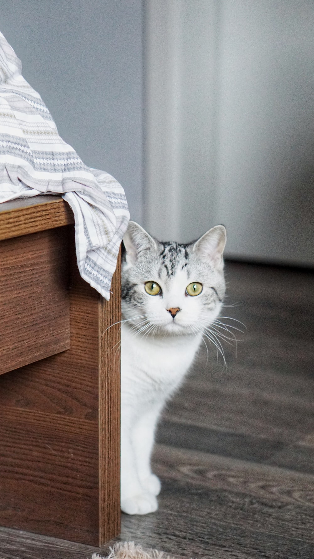 selective focus photo of cat