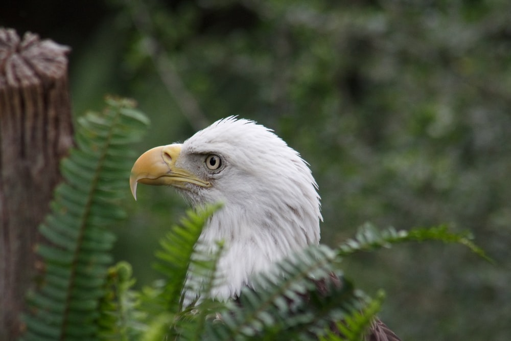 white and gray eagle near fern plant during daytime