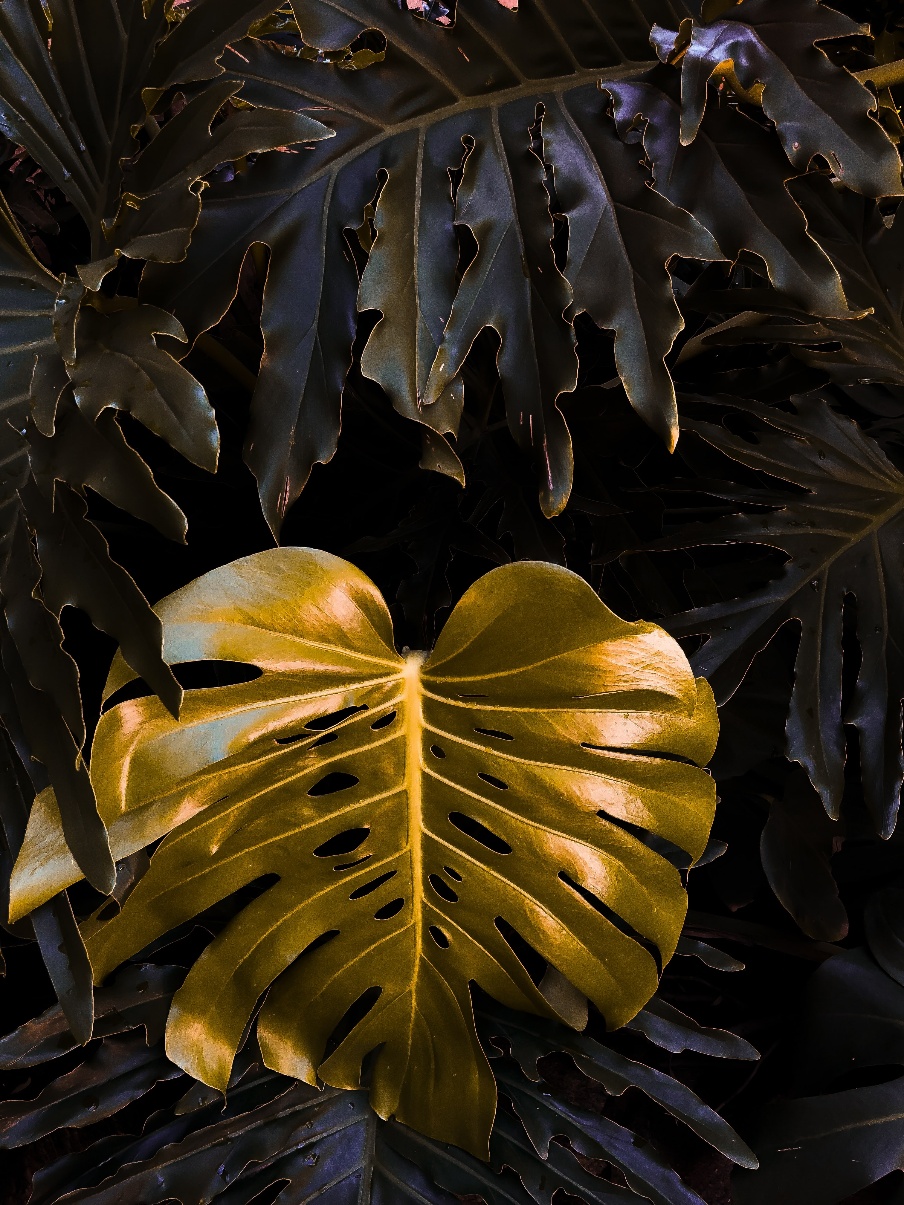 yellow and black butterfly decor