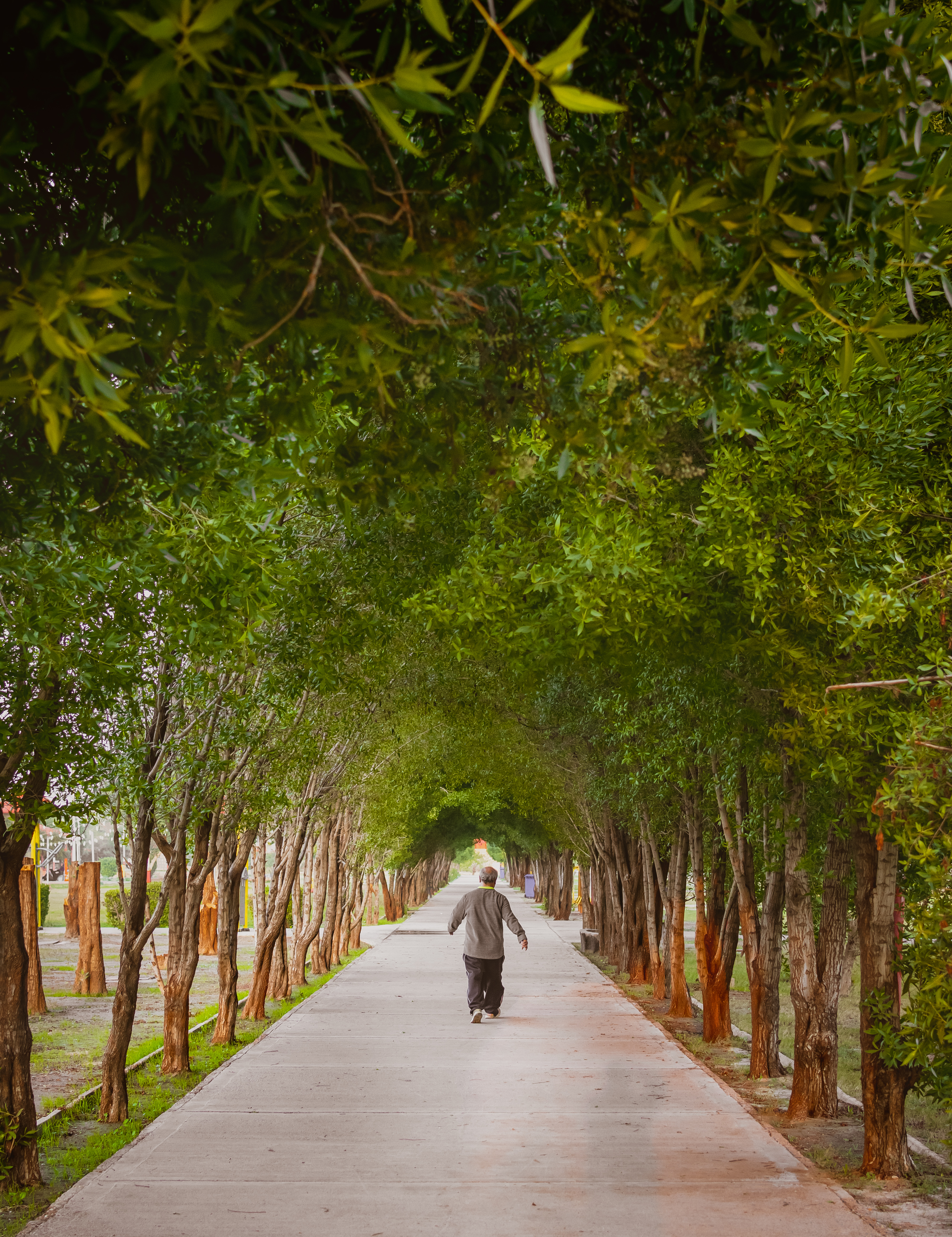 man walking on road in middle of trees during daytime