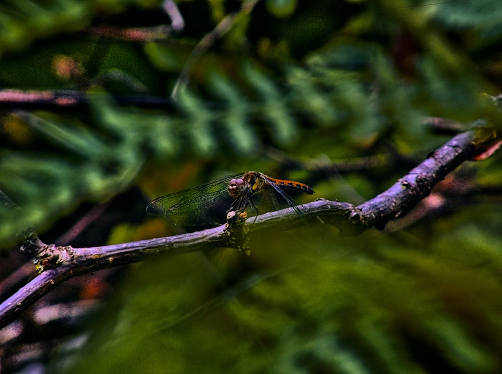 green and brown dragonfly on brown tree branch in tilt shift lens