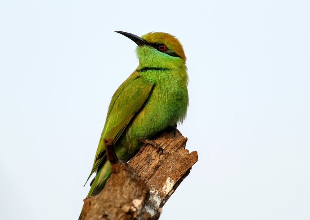 green bird pearching on tree