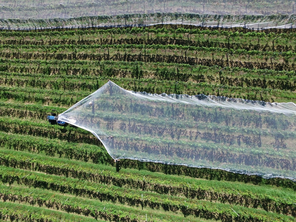Intensive Agriculture Pictures | Download Free Images on