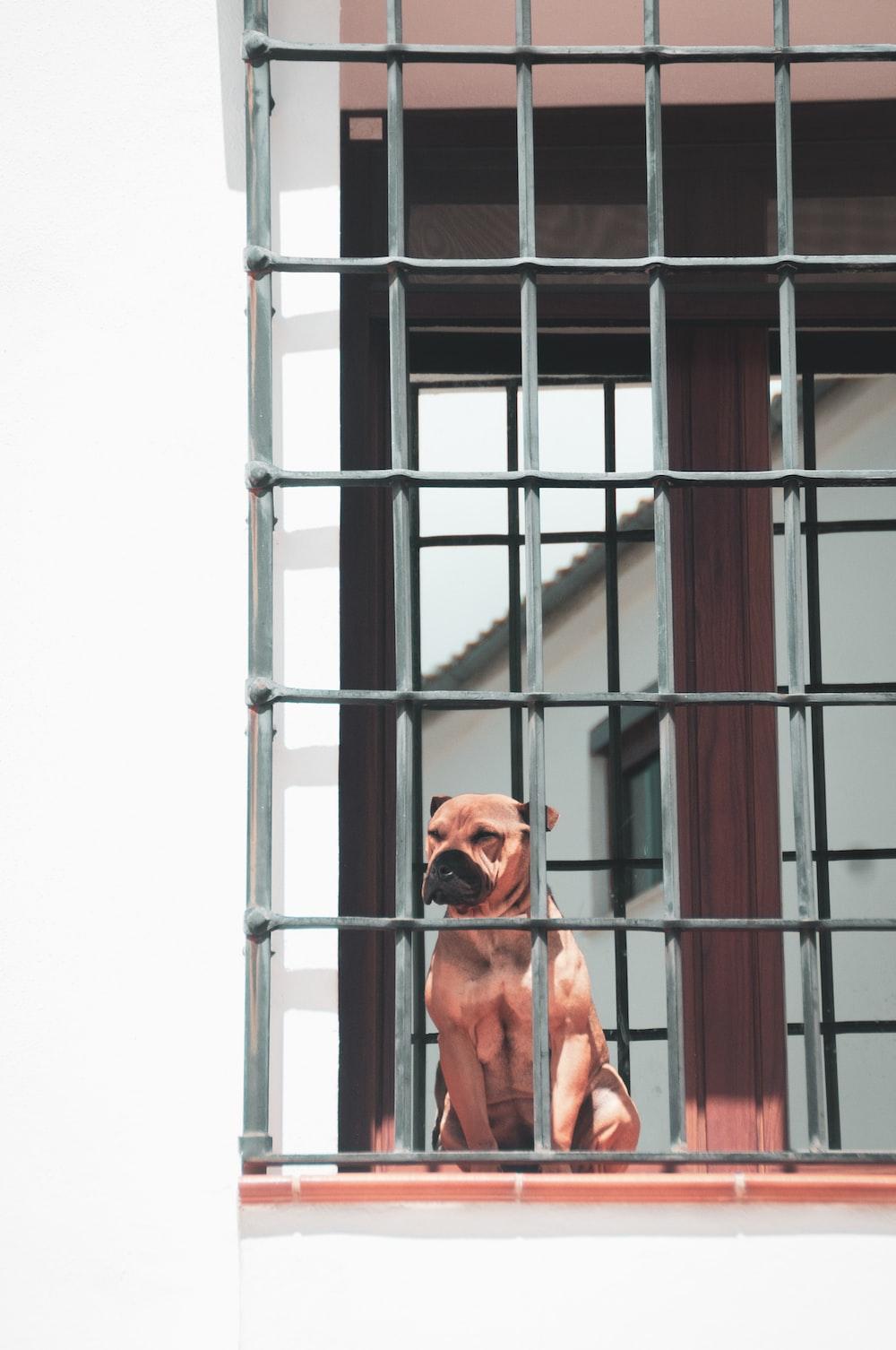 adult tan dog on black metal grill wall