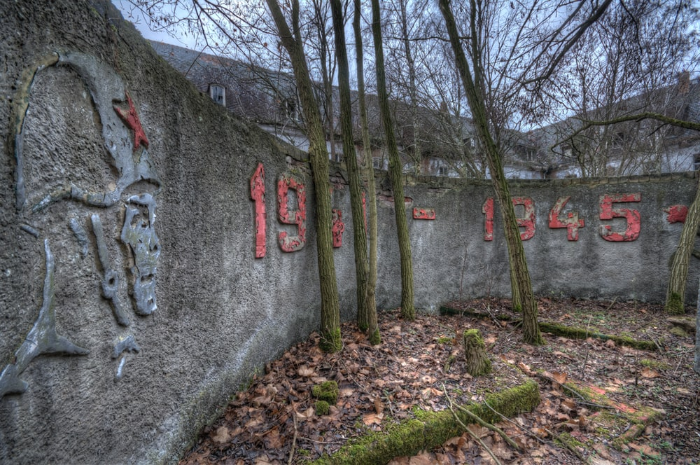 four trees near concrete wall