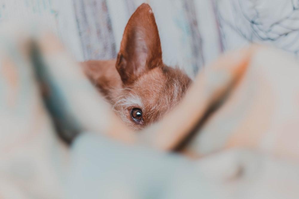 dog peeping near wall