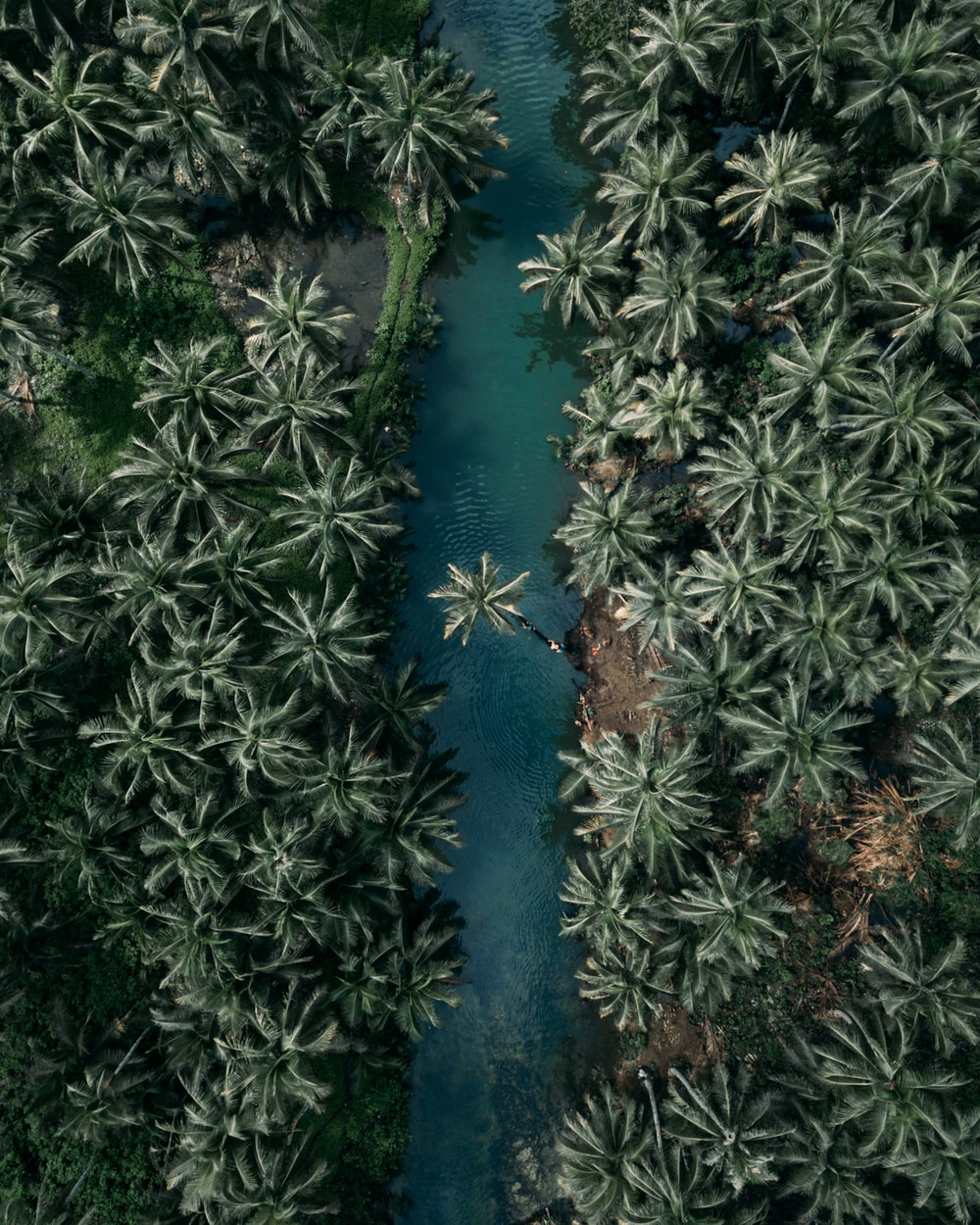 top view of palm trees
