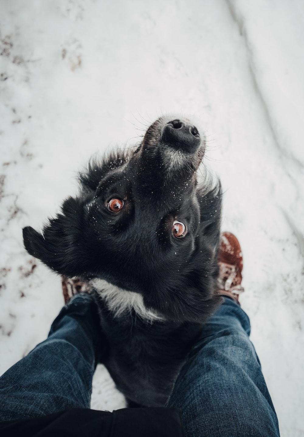 high angle photography of dog looking upward
