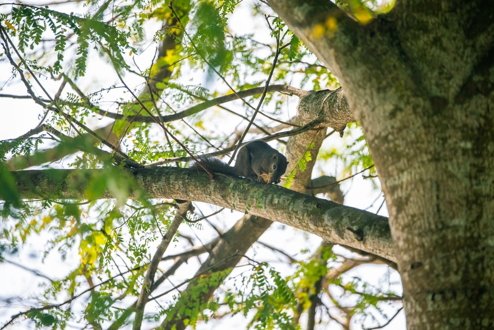 brown squirrel on top of tree