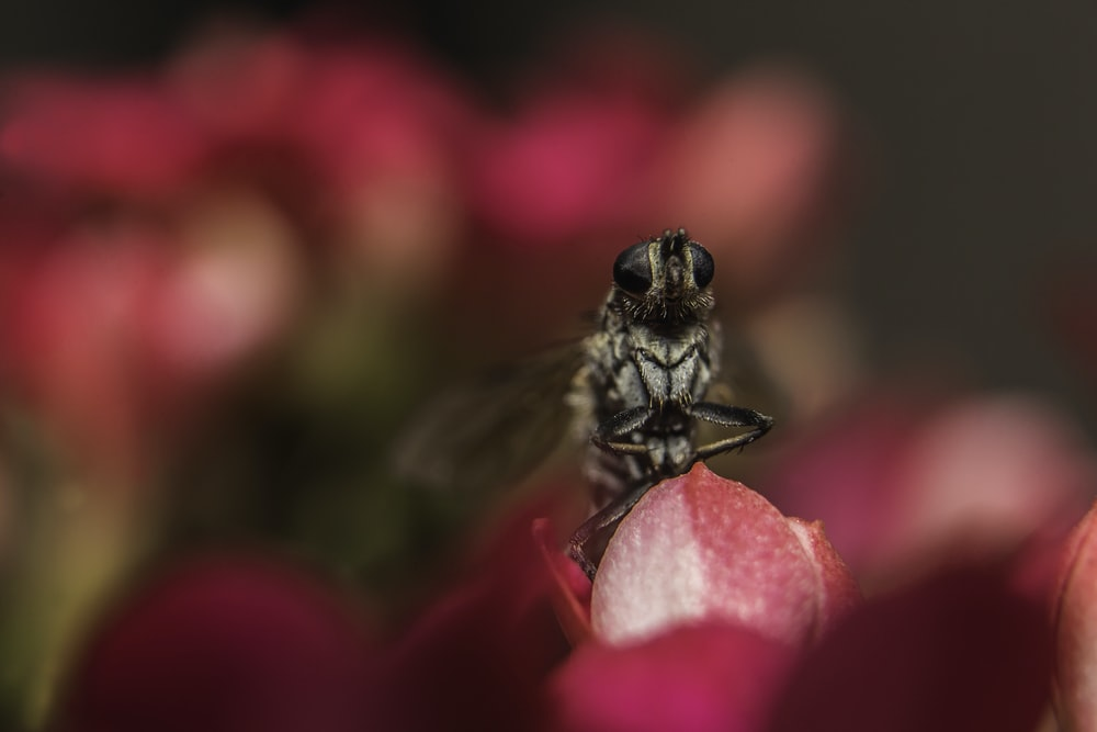macro photography of inside perched on pink flower