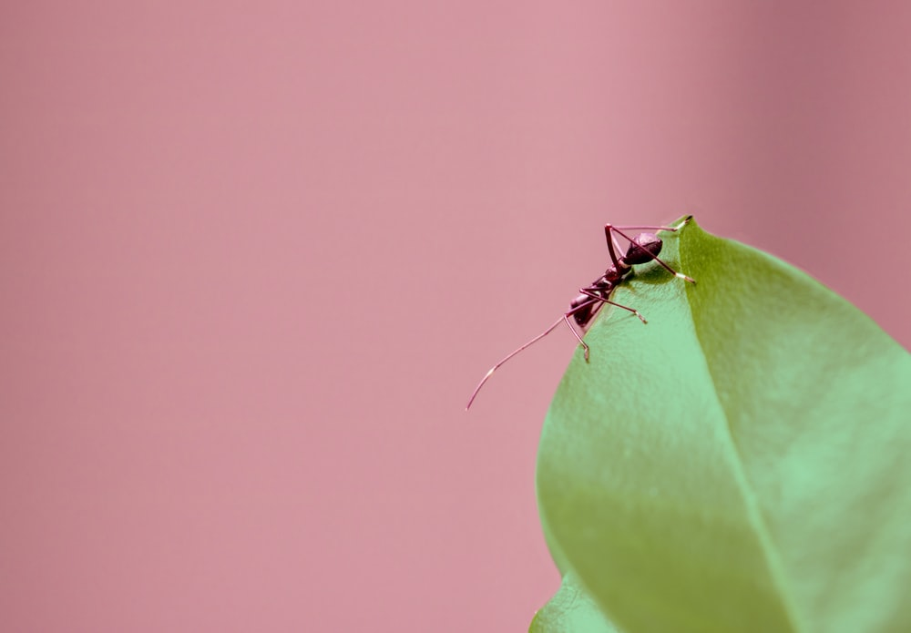 selective focus photography of brown ant on green leaf