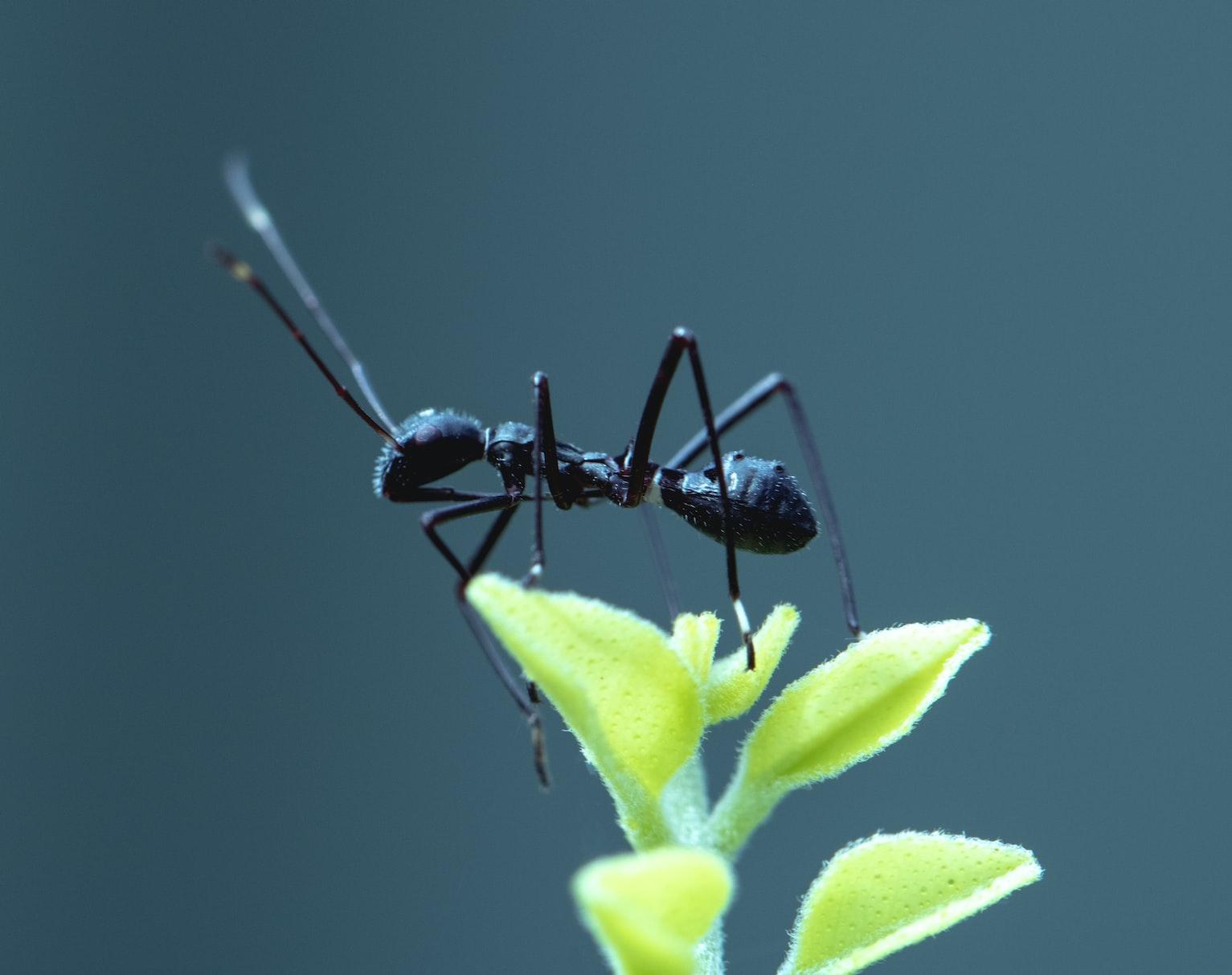 Gastos hormiga en tu presupuesto
