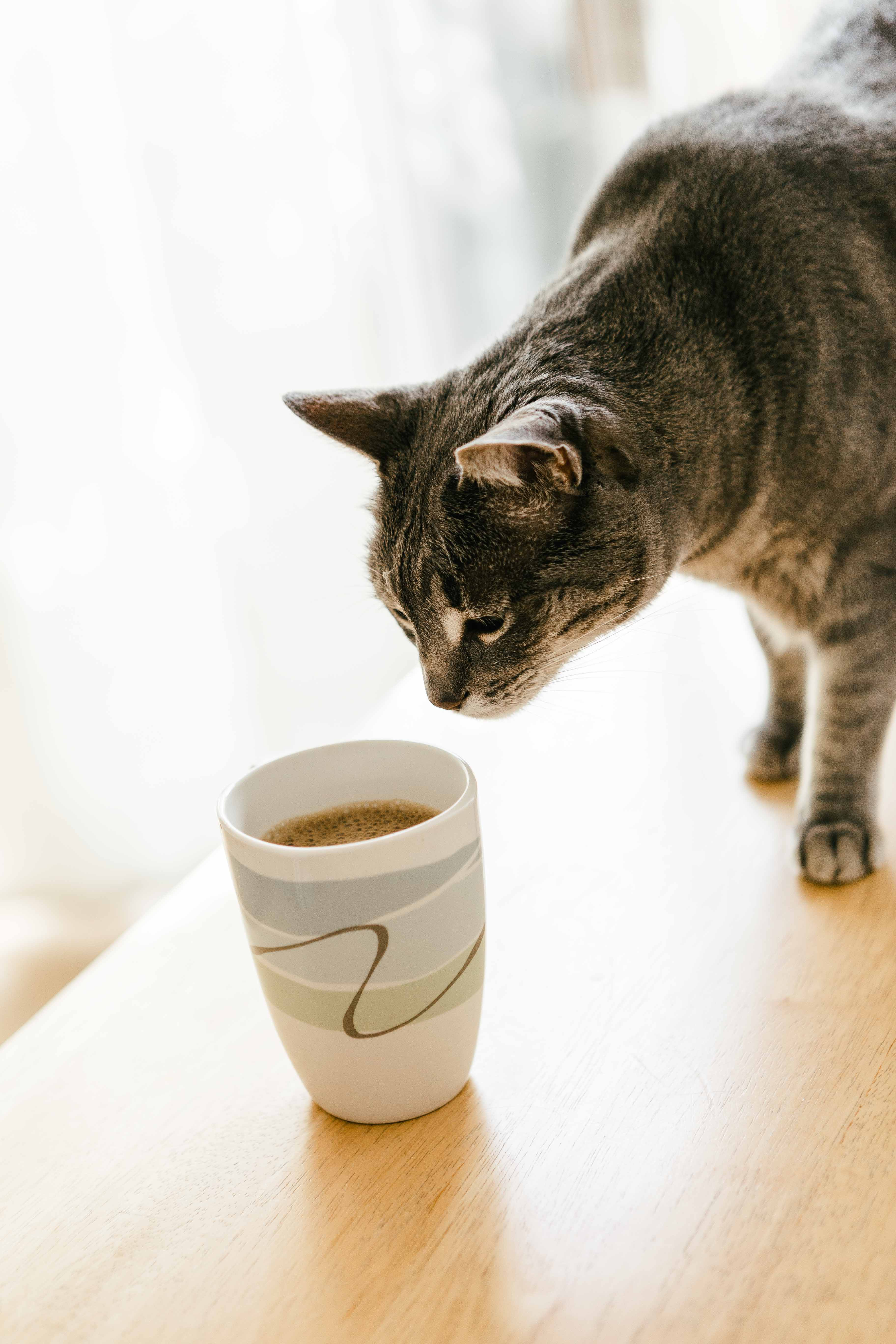 cat walking on table beside filled cup