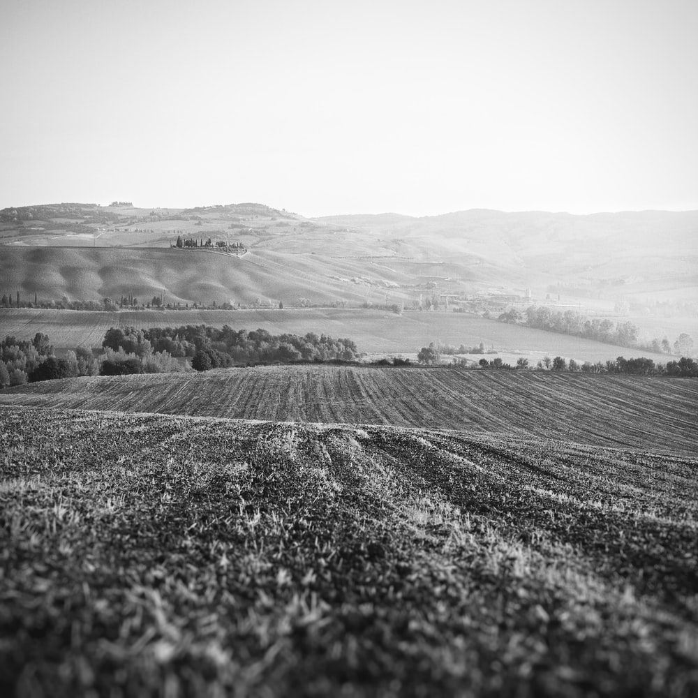 grayscale photo of land