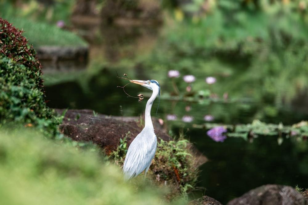 white bird with long beak near flower