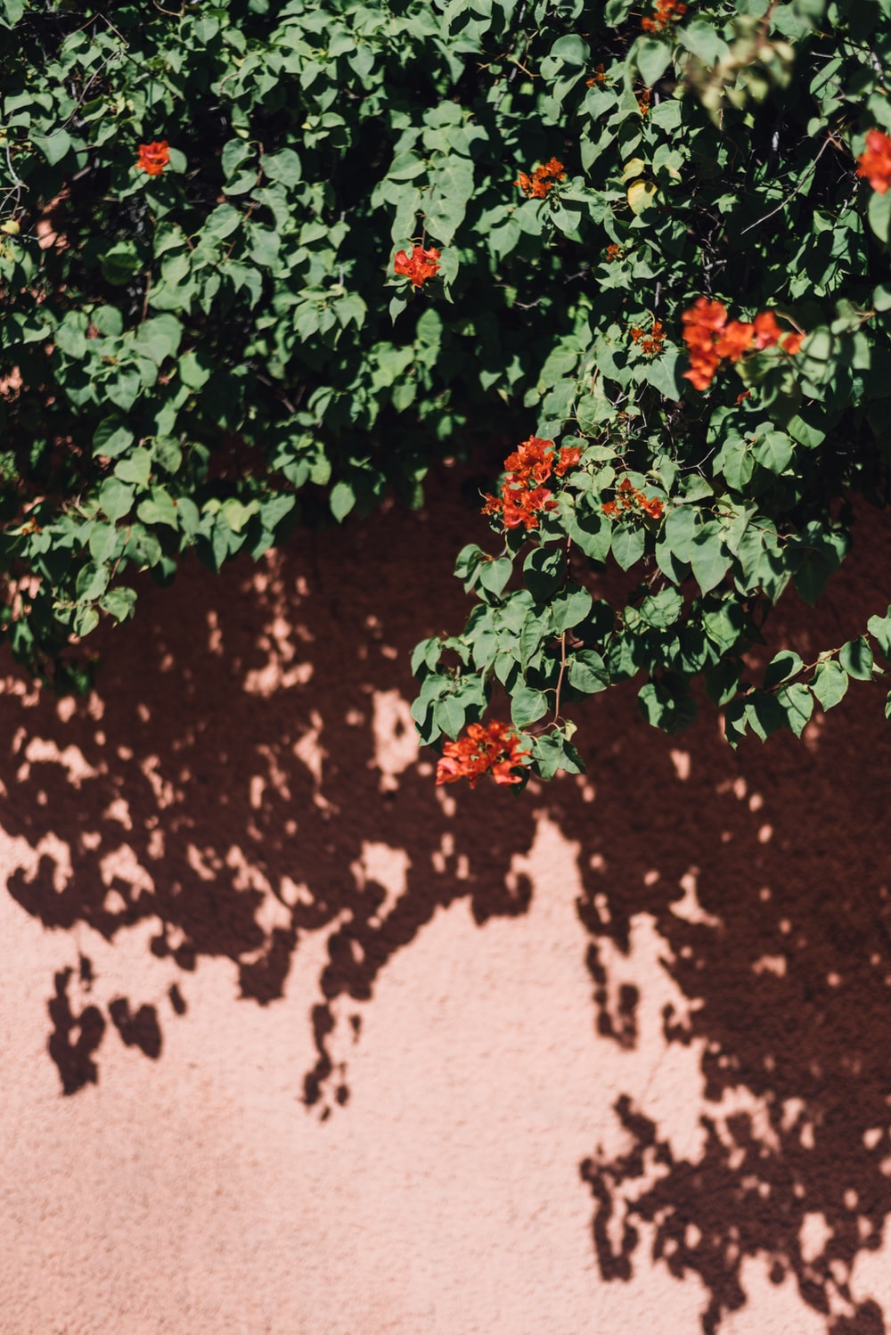 red and green flower vines across pink wall
