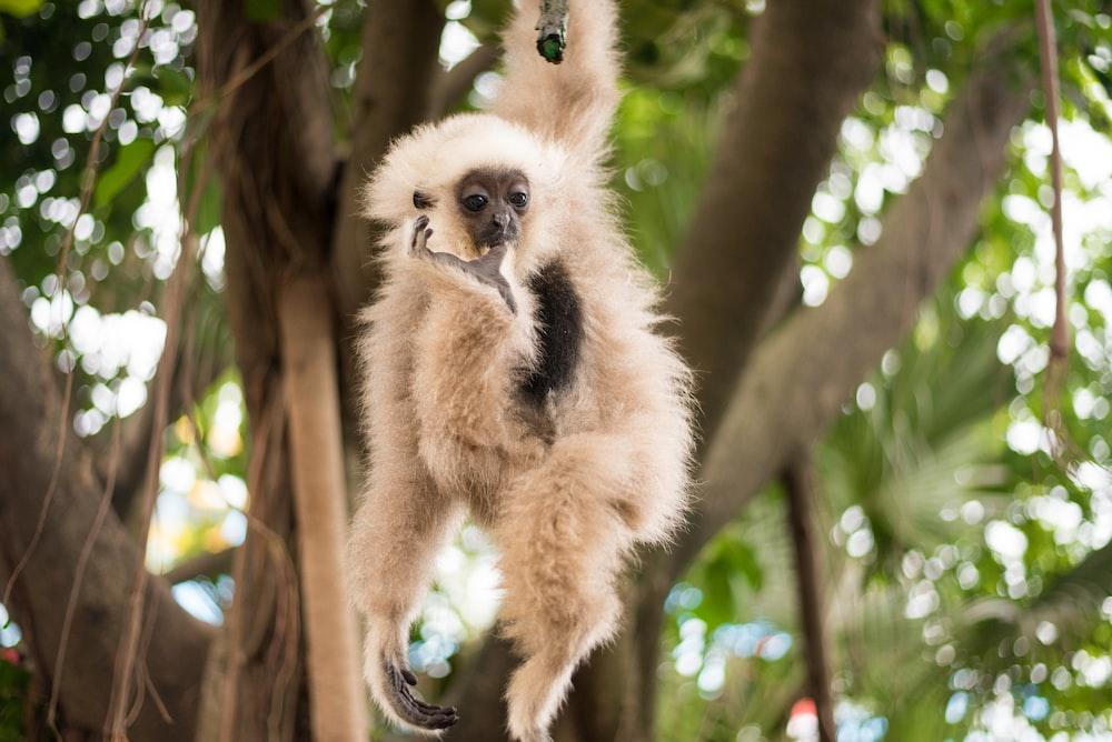 white monkey hang on tree during daytime