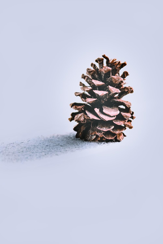pine cone
