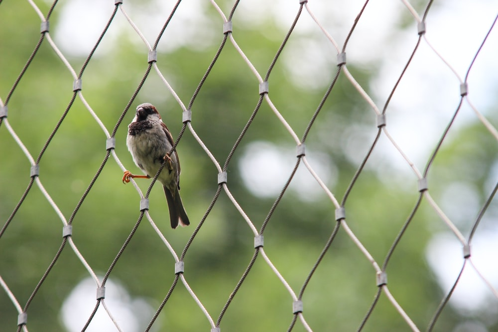 brown bird standing on gray cyclone fence