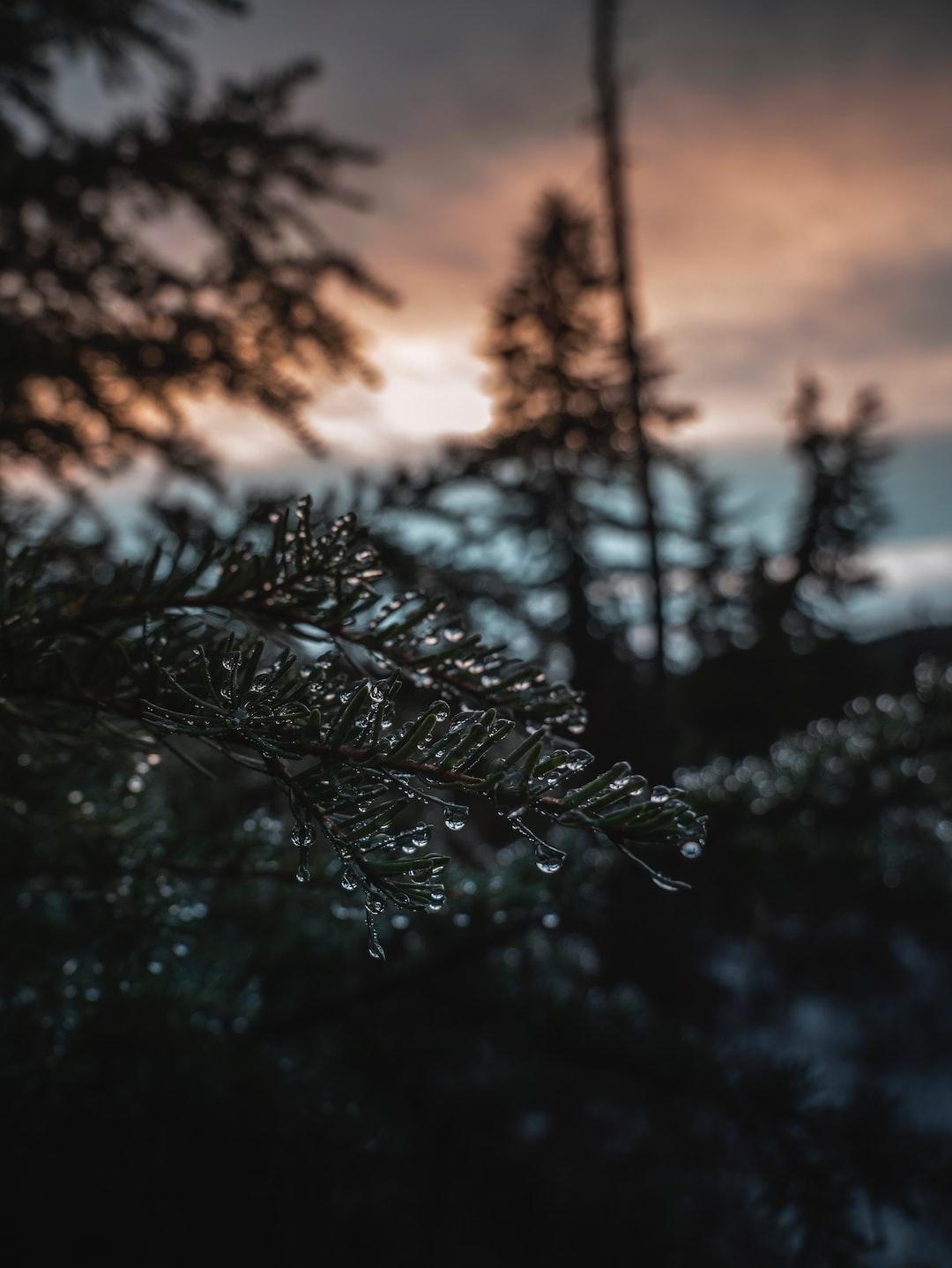 Munro Lake