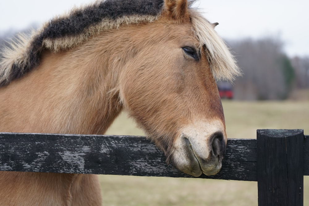 brown horse in front of the fence